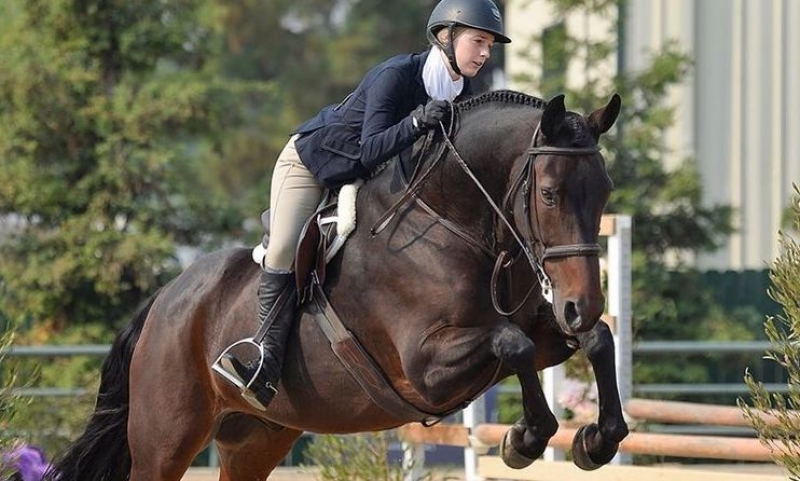 Dark horse jumping.