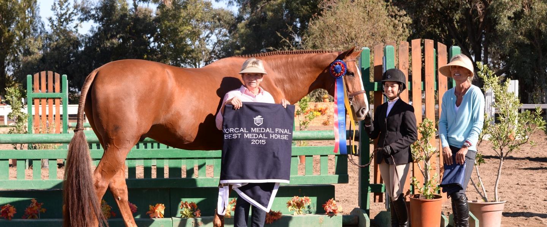 Best Medal Horse