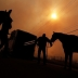 Horses being evacuated from a fire area.